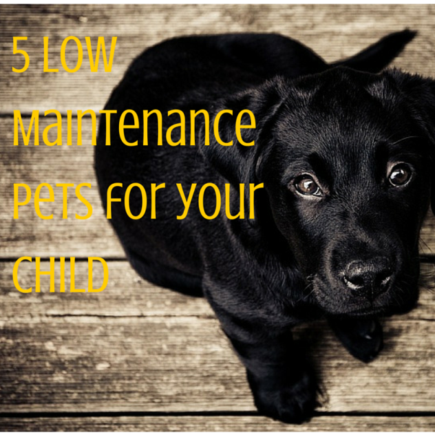 5 Low Maintainace Pets for your kids