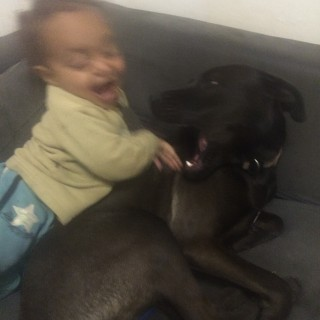 My son and our dog
